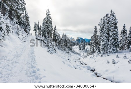 a path cover with snow in paradise area,scenic view of mt Rainier National park,Washington,USA.