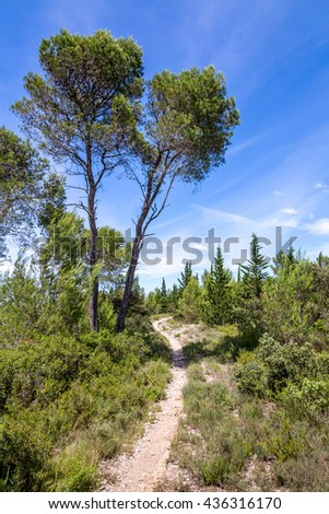 a path in a landscape of scrubland in the South of France