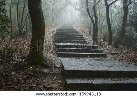 a path in fog - stock photo