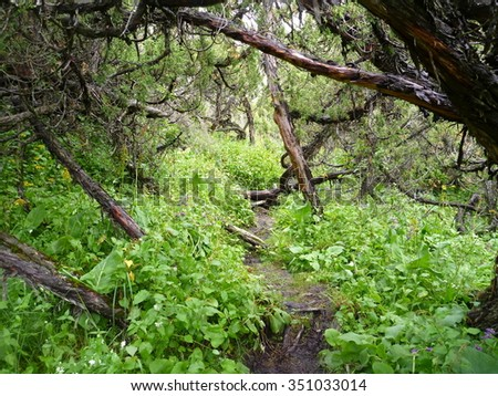 a path in the mountain jungle - stock photo