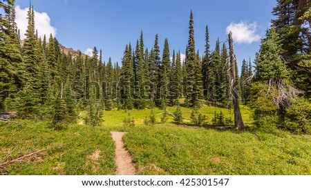A path in the thick spruce forest. PALISADES LAKES TRAIL, Sunrise Area, Mount Rainier