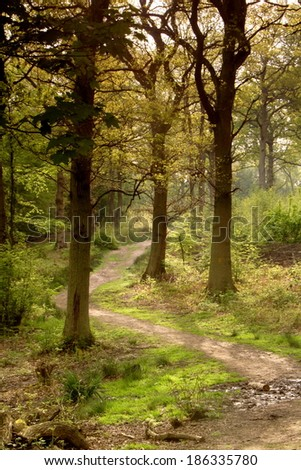 A path leads through the trees in a Hertfordshire wood on an early morning