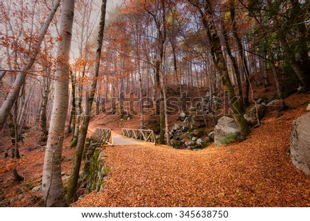 A path of golden autumn leaves and trees leading to a wooden bridge on the GR20 trail in a forest at Vizzavona in Corsica