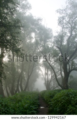 A path through a mysterious foggy forest