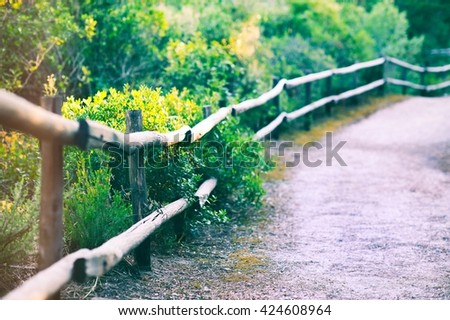 A path trough a forest - stock photo