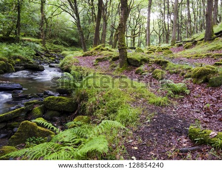 A path trough an old mossy forest along a brook at Dartmoor, Devon, England. - stock photo