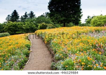 A pathway through a field of wild poppies in Showa Kinen park, Japan.