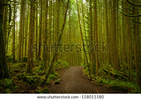 A pathway through the dense woodland forest at Golden Ears Provincial Park, British Columbia (BC), Canada - stock photo