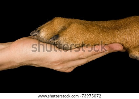 A paw of a dog and a caucasian woman hand in symbolic of friendship between human and dog - stock photo