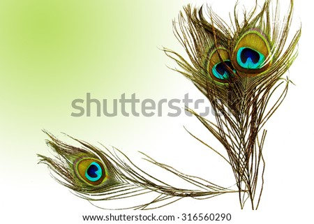 A peacock feather on wooden blue background.