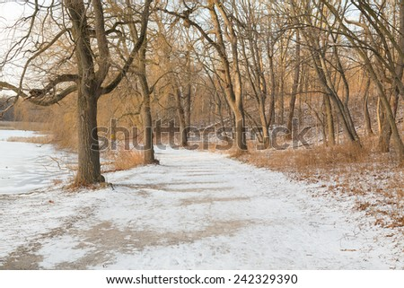 A pedestrian path in the winter with snow on the ground and trees without leaves