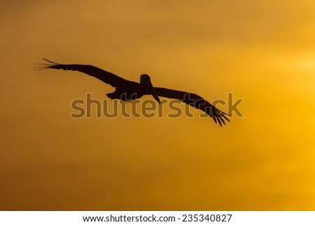 A pelican flies across the brilliant golden yellow of the sky as the sun sinks beyond the horizon.