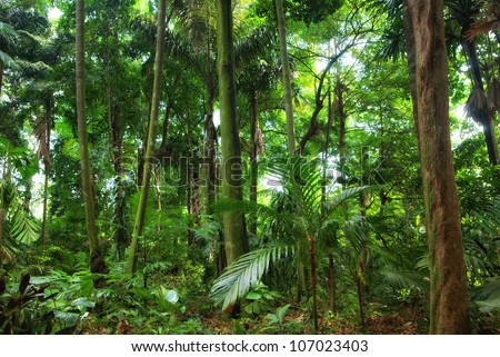 a perfect beautiful rain forest in singapore