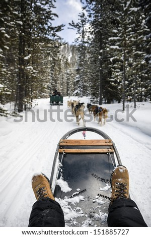 a person being pulled by sled dogs on a snow covered trail