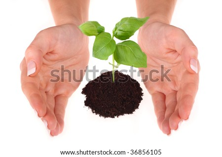 A person holding a small plant on white in the studio - stock photo