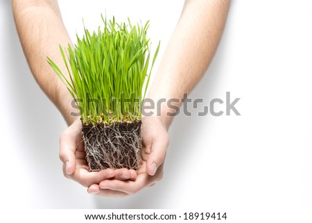 A person holds a bunch of young grass sprouts - stock photo