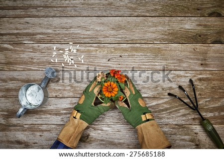 a person wearing gardening gloves working potting a plant - stock photo