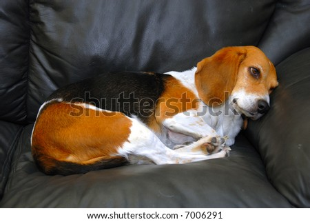 A pet sitting on the sofa sadly - stock photo