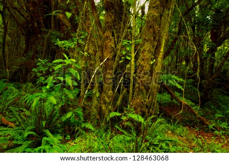 A photo from rain forest - New Zealand - stock photo