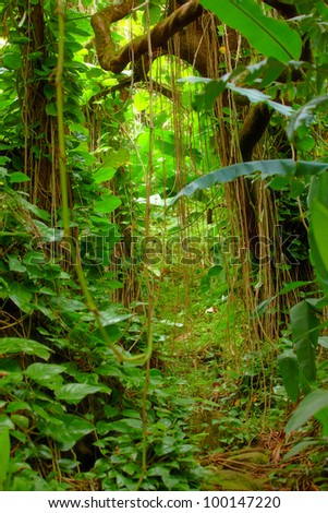 A photo Hawaiian rain forest - stock photo