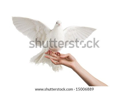 A photo of a dove on a woman's hand - stock photo