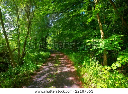 A photo of a lush forest in sunshine