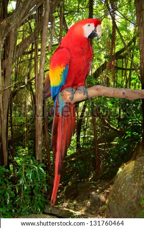 A photo of a macaw parrot perched in a branch in the tropical jungle. - stock photo