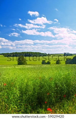 A photo of a the countryside in summertimde - stock photo