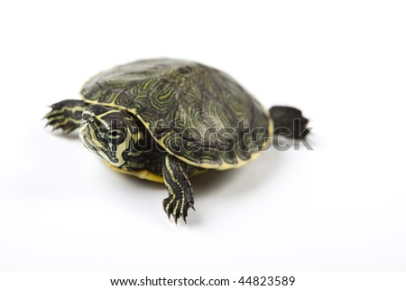 A photo of a turtle on a white background