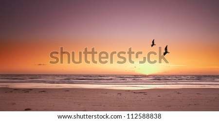 A photo of beach sunset and sea gulls - stock photo