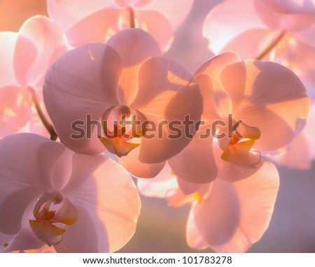 A photo of Beautiful Orchids