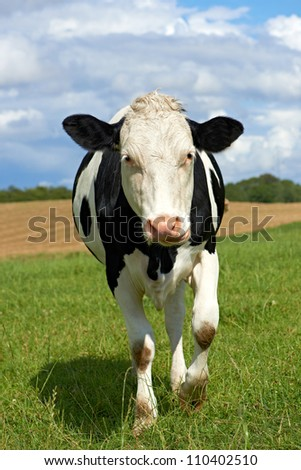 A photo of black and white cows - stock photo