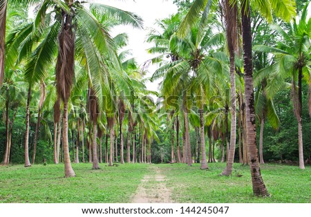 a photo of coconut field in thailand,landscape view