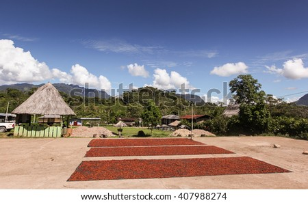 A photo of collecting and drying cocoa beans  in Huayhuantillo village near Tingo Maria in Peru, 2011 - stock photo