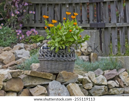 A photo of flowers in the wicker basket, lying on carefully arranged stones in the garden, stylized and filtered to look like an oil painting