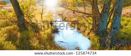 A photo of forest swamp - stock photo