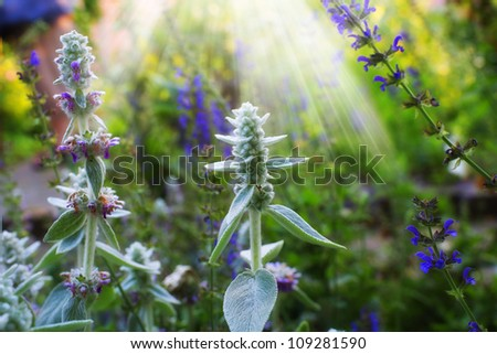 A photo of garden details - stock photo