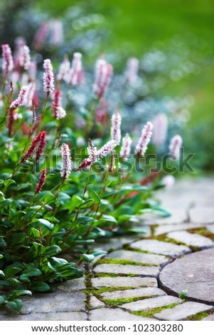 A photo of garden flowers - stock photo