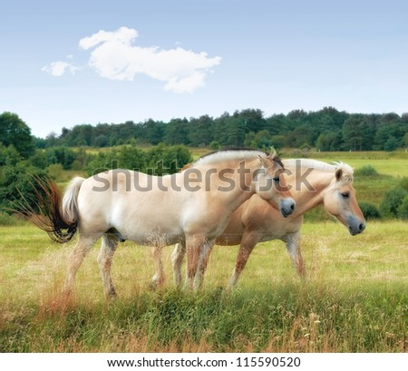 A photo of horses in natural setting - stock photo