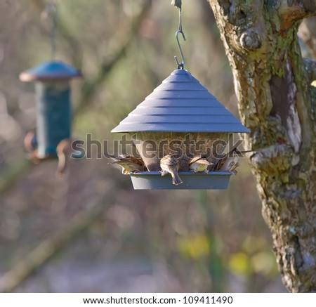 A photo of lots of bird at a bird feeder - stock photo