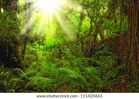 A photo of lush rain forest