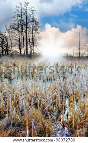 A photo of nature in late wintertime - stock photo