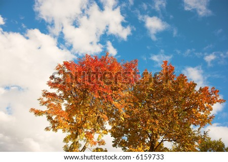 A photo of orange leaves in early autumn