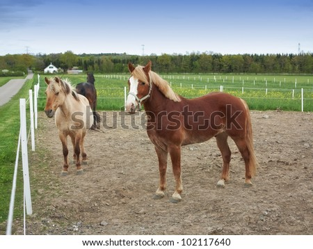 A photo of pair of brown horses on a field - stock photo