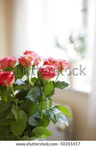 A photo of Roses indoor with window as background - stock photo