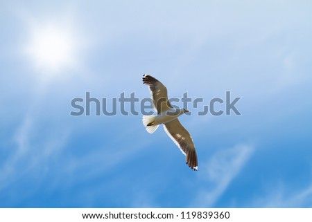 A photo of seagulls - stock photo