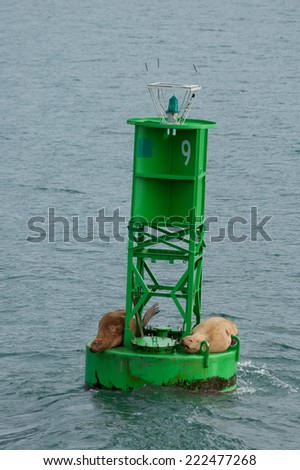 A photo of several Stellar Sea Lions resting on a buoy in Port Veldez, coast of Alaska.  - stock photo