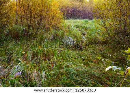 A photo of small lake and swamp - stock photo