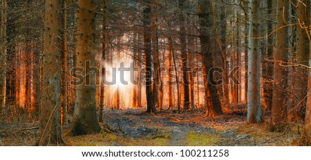A photo of sunrise or sunset in the forest - stock photo