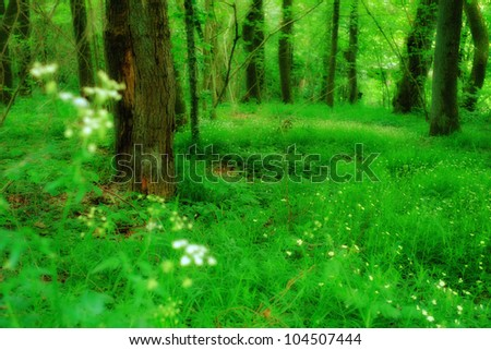 A photo of Sunshine in the green forest